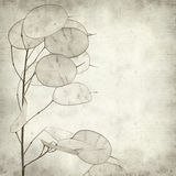 Textured old paper background. With Lunaria annua, silver dollar plant Stock Image