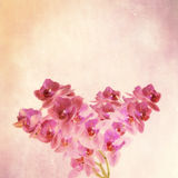 Textured old paper background with  magenta orchid Stock Photography