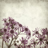Textured old paper background. With Pericallis webbii, flowering plant native to Gran Canaria royalty free stock image