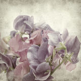Textured old paper background. With sweet pea flowers stock images