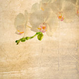 Textured old paper background with white and magenta orchid Stock Images