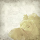 Textured old paper background. With yellow rose Stock Photos