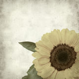 Textured old paper background. With yellow sunflower Royalty Free Stock Photos