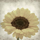 Textured old paper background. With yellow sunflower Royalty Free Stock Photography