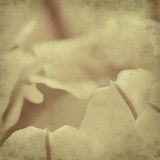 Textured old paper background Royalty Free Stock Image