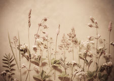 Textured old paper with plants and flowers royalty free stock image