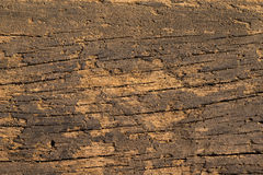 Textured Old Wood - Macro. Royalty Free Stock Photo
