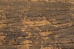 Textured Old Wood - Macro. Royalty Free Stock Photo