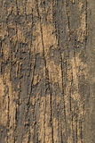 Textured Old Wood - Macro. Stock Photos