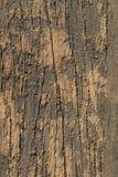 Textured Old Wood - Macro. Stock Photos