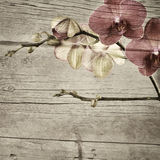 Textured old wooden vintage background Royalty Free Stock Images