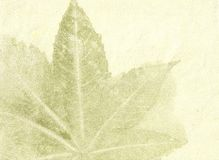 Textured Organic Fiber Paper. Handmade organic fiber paper and leaf veins Royalty Free Stock Photos
