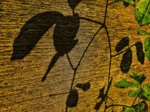 Shadow of plant on wood fence in urban village Stock Photos