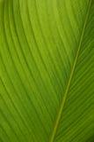 Textured palm leaf across sun light Stock Photography