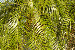 Textured Palm Trees Stock Images
