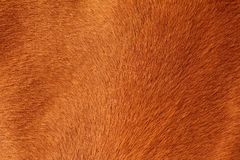 Textured pelt of a brown horse Royalty Free Stock Image