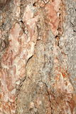 Textured pine bark Royalty Free Stock Images