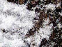 Textured powierzchnia barkentyna drzewo z śniegiem Obrazy Stock