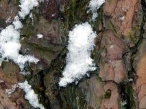 Textured powierzchnia barkentyna drzewo z śniegiem Zdjęcie Royalty Free