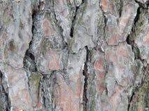 Textured powierzchnia barkentyna drzewo z śniegiem Obraz Stock