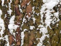 Textured powierzchnia barkentyna drzewo z śniegiem Zdjęcia Stock