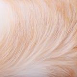 Textured psiego włosy tło Zdjęcie Stock