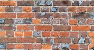 Textured red brick wall stock photography