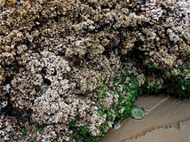 Textured rock at low tide Stock Image