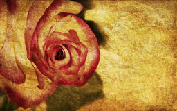 Textured rose. On old paper grunge background Royalty Free Stock Photos
