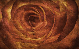 Textured rose. On old paper grunge background Royalty Free Stock Photography