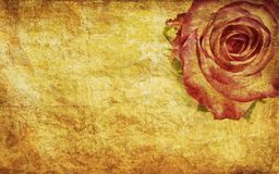 Textured rose Royalty Free Stock Image