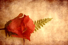 Textured rose Royalty Free Stock Photo