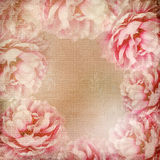 Textured Roses Background ( 1 of set) Royalty Free Stock Photo