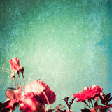 Textured roses Stock Images