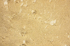 Textured sand background. In the country of thailand Stock Image