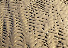 Textured sand in evening, the Baltic sea coast. Textured sand in the evening, the Baltic sea coast Royalty Free Stock Photography