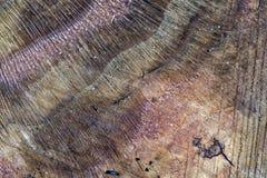 Textured sawn log end Royalty Free Stock Photo
