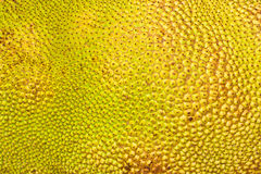 Textured Skin Of A Jack-fruit. Closeup Of Textured Skin Of A Jack-fruit Stock Images