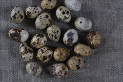 Textured spring background with small quail eggs. Eco products Royalty Free Stock Photo