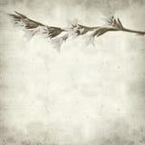 Textured stary papierowy tło Fotografia Royalty Free