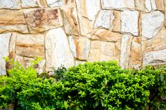 Textured stone wall and plants Stock Photo