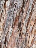 Textured Stringy Bark Eucalyptus Tree Stock Image