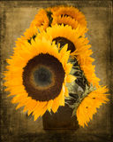 Textured Sunflowers Stock Photos