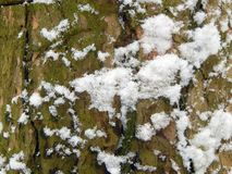 The textured surface of the bark of a tree with snow Stock Images