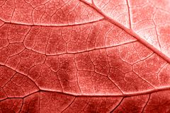 Textured surface of leaf in colour of the year 2019 Pantone - Living Coral royalty free stock photos