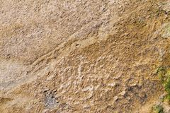 Textured surface silt or ooze of brown color. For a natural background and for wallpaper stock photos