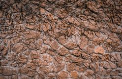 Textured texture of an old stone wall with plants of bushes. Wallpaper for background and design royalty free stock photo