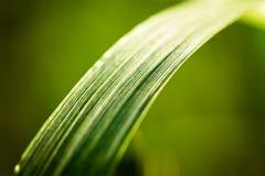 Textured trawy ostrze Zdjęcie Stock
