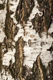 Textured tree bark Stock Photos