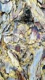 Textured tree bark closeup. Many colours. Stock Image